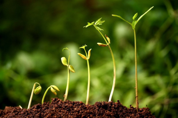 Zmiany w ustawie o rolnictwie ekologicznym
