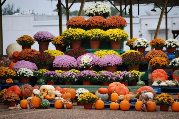 Rośliny tarasowe i balkonowe na jesień