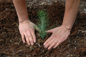 Czas na zmiany - sadzenie i przesadzanie