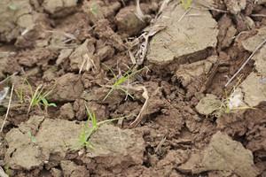 Pobieranie gleby do analizy