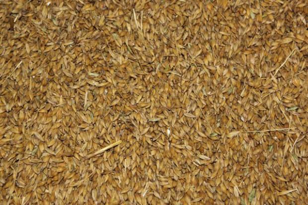 Nowe dołki cen zbóż