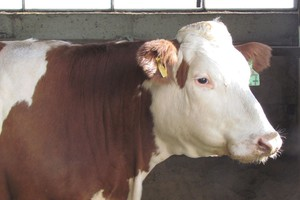 Porównaj swoje krowy z hodowanymi przez ANR