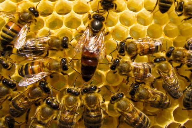 Otwarto Pomorskie Centrum Pszczelarstwa