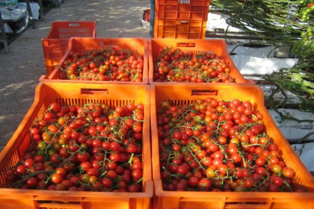 Produkcja i przetwórstwo warzyw w Polsce na początku XXI wieku