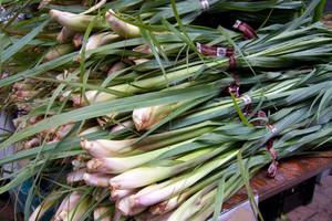 Trawa cytrynowa, czy ma szanse na polskim rynku zielarskim?