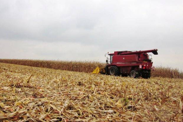 Rozpoczęły się zbiory kukurydzy na ziarno