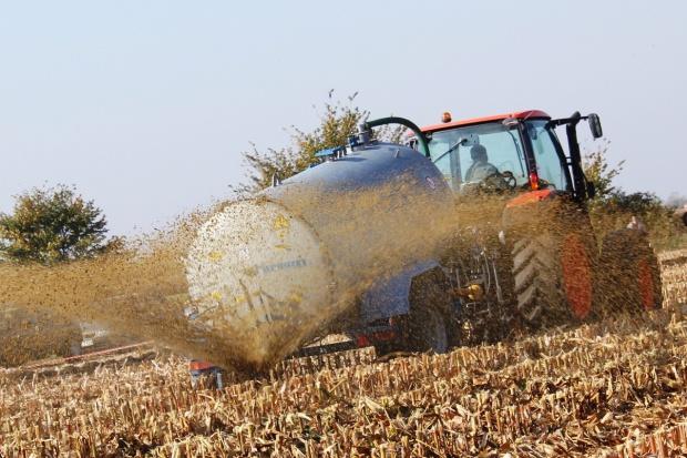 Odpowiednio zagospodaruj resztki pożniwne po zbiorze kukurydzy