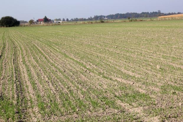 Ciągle trwają siewy zbóż ozimych