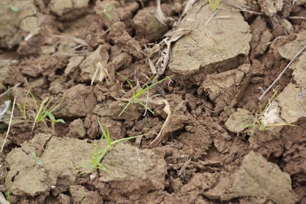 Zanieczyszczenia gleby - metale ciężkie