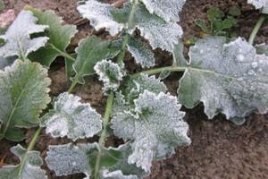 Ostrożnie z zabiegami ochrony roślin - zapowiadane są nocne przymrozki