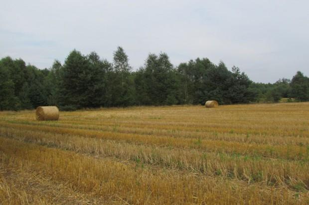 Perspektywę rozwoju mają gospodarstwa liczące 30 ha