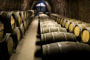 Słabe zbiory w winnicach