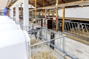 Nowy system zarządzania i żywienia cieląt od Urbana