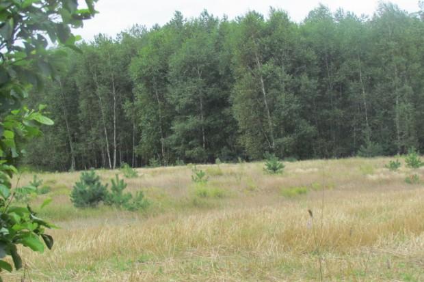 SKO uchyliło decyzję pozwalającą wyciąć las pod fermę