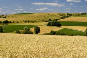 Rolpetrol: Mało transakcji i niskie ceny na rynku zbóż