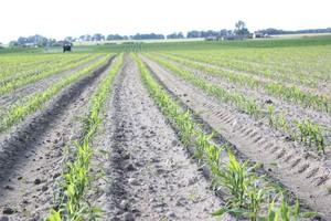 Ikanos 040 OD do odchwaszczania kukurydzy