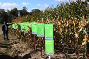 Wyniki plonowania kukurydzy FarmSaat