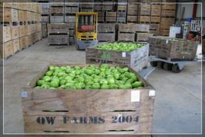 Polscy sadownicy nawiązują kontakty w Emiratach Arabskich i Chinach