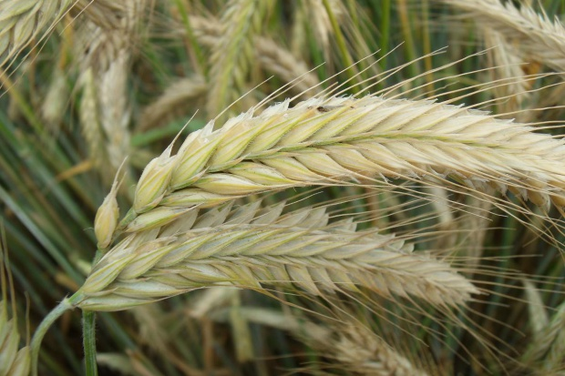 Skuteczność biopreparatów