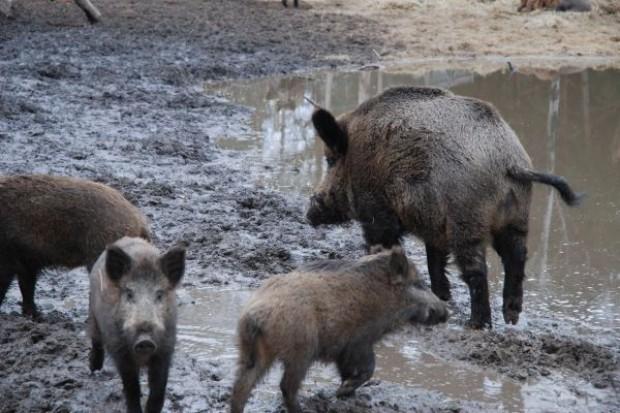 Rolnicy nadal czekają na rozwiązanie problemu szkód łowieckich