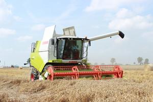 Ponowne wzrosty cen pszenicy