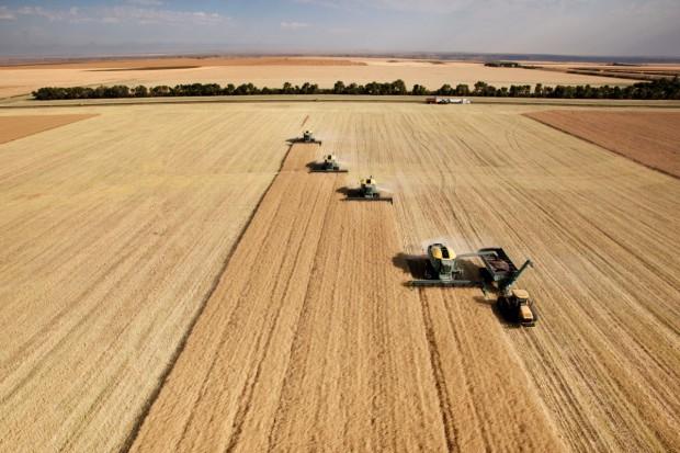 Prognozy większych światowych zbiorów pszenicy, kukurydzy i soi