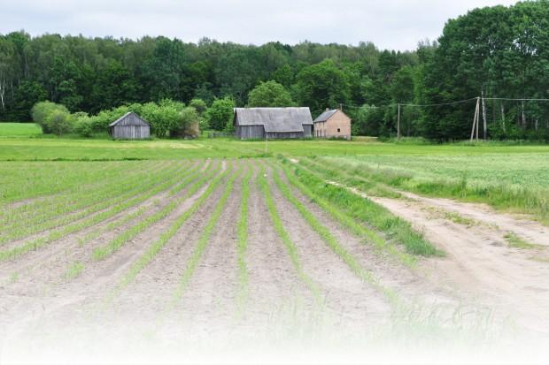 Trendy w ochronie kukurydzy przed chwastami