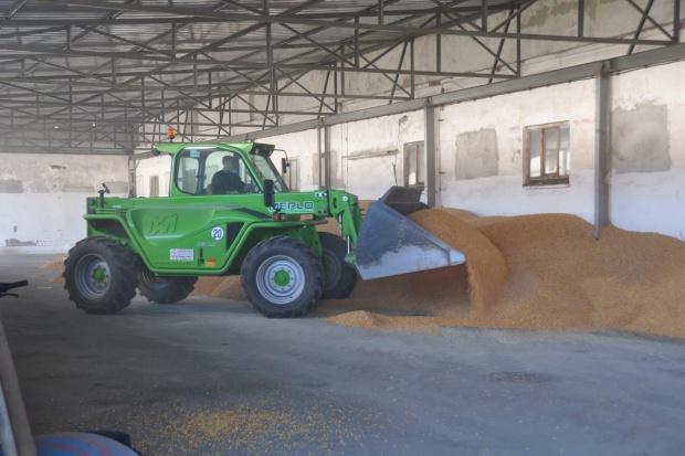 Mikotoksyny w przechowywaniu zbóż