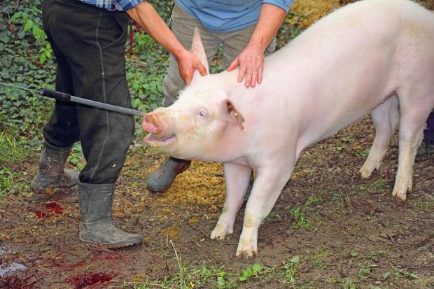 Odszkodowanie za zwierzęta - co należy wiedzieć
