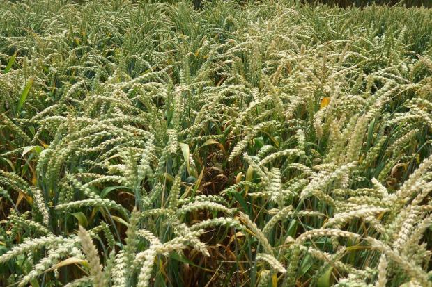 Rośliny potrzebują fosforu