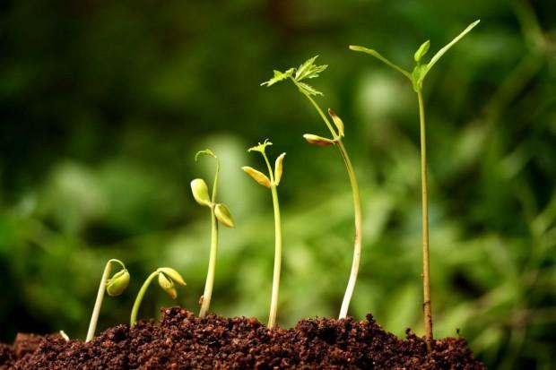 Rolnictwo ekologiczne w PROW 2014-2020