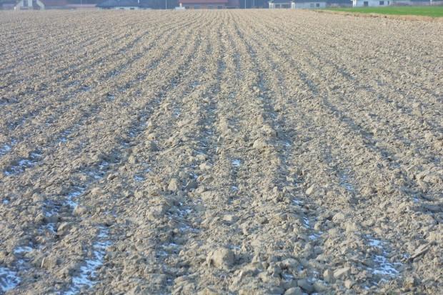 Intensywne rolnictwo nie niszczy życia glebowego