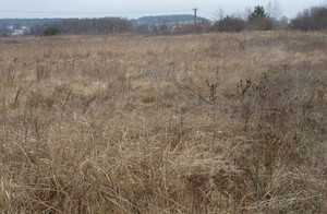 Monsanto wprowadza nową wersję herbicydu Roundup
