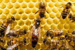Populacja pszczół po zimie zmniejszy się o ponad 30 proc.