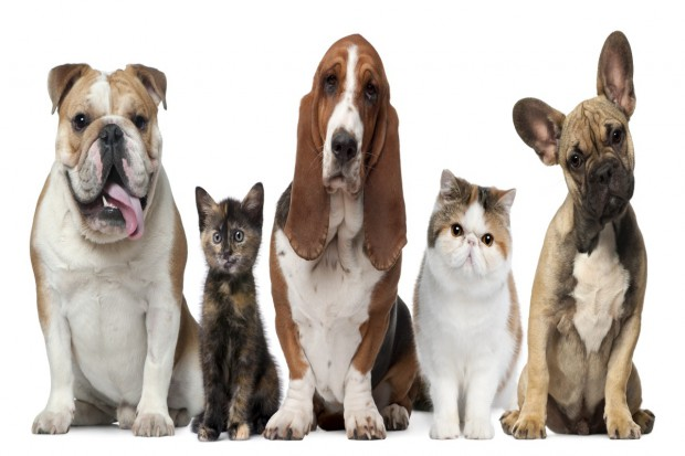 Ratownicy weterynaryjni: Warto stworzyć system pierwszej pomocy dla zwierząt