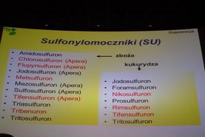 Zwalczenie chwastów, w tym miotły zbożowej sulfonylomocznikami