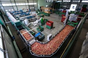 Rząd przyjął przepisy ws. pomocy pomocy dla producentów jabłek