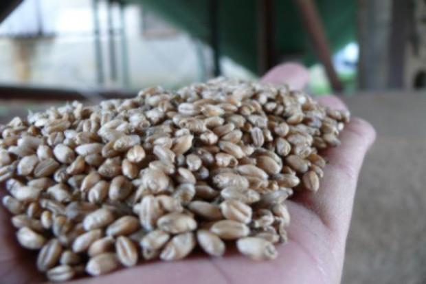 Delikatne spadki cen zbóż