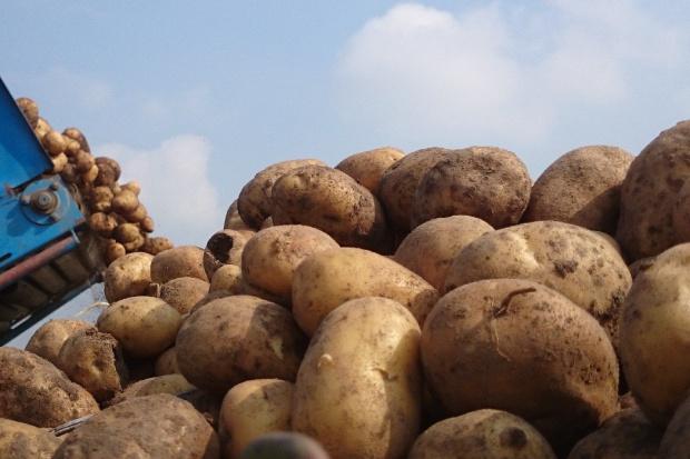 Skąd Rosja importuje ziemniaki?