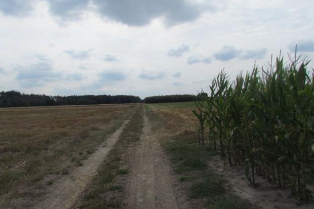 Które elementy krajobrazu zaliczają się do działki rolnej?