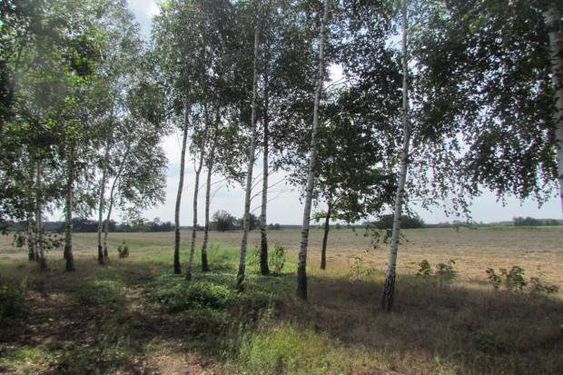 Ile drzew może rosnąć na działce rolnej?