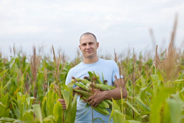 Państwa UE zatwierdziły przepisy ułatwiające zakazywanie upraw GMO