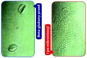 Eliminacja mikotoksyn z paszy i organizmów zwierząt