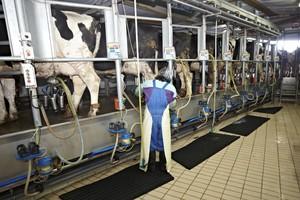 Zniesienie kwotowania wpłynie pozytywnie na rynek mleka