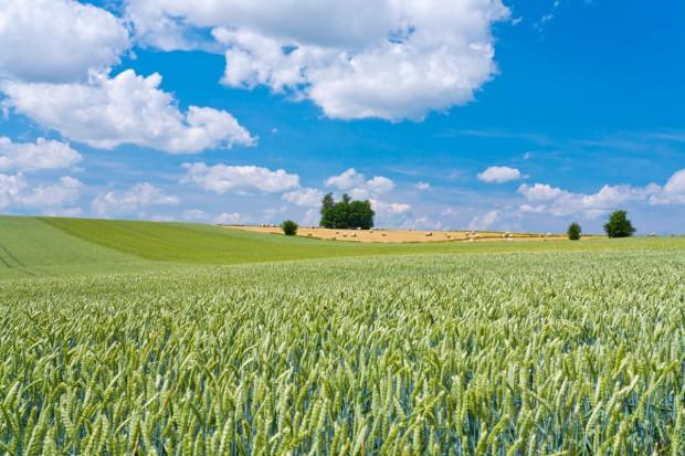 Produkcja roślinna podstawą rumuńskiego rolnictwa