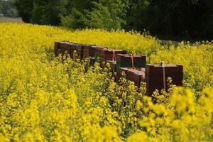 Szkolenia z integrowanej ochrony roślin