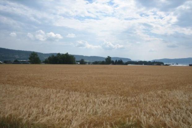 W 2014 r. Polska zwiększyła eksport zbóż