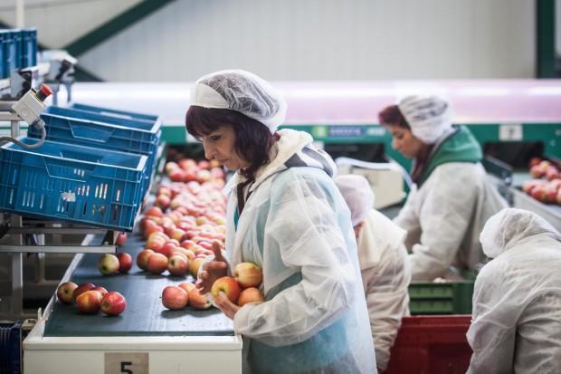 IERiGŻ: eksport jabłek od sierpnia do grudnia ub.r. spadł o 23 proc.