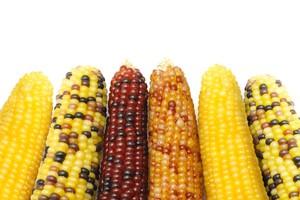 Mniejsza prognoza światowej produkcji kukurydzy