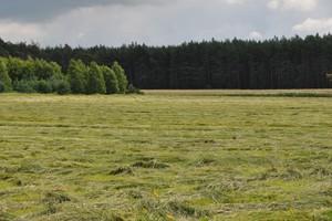 Ponad 60 rolników chce wydzierżawić łąki na potrzeby żubrów